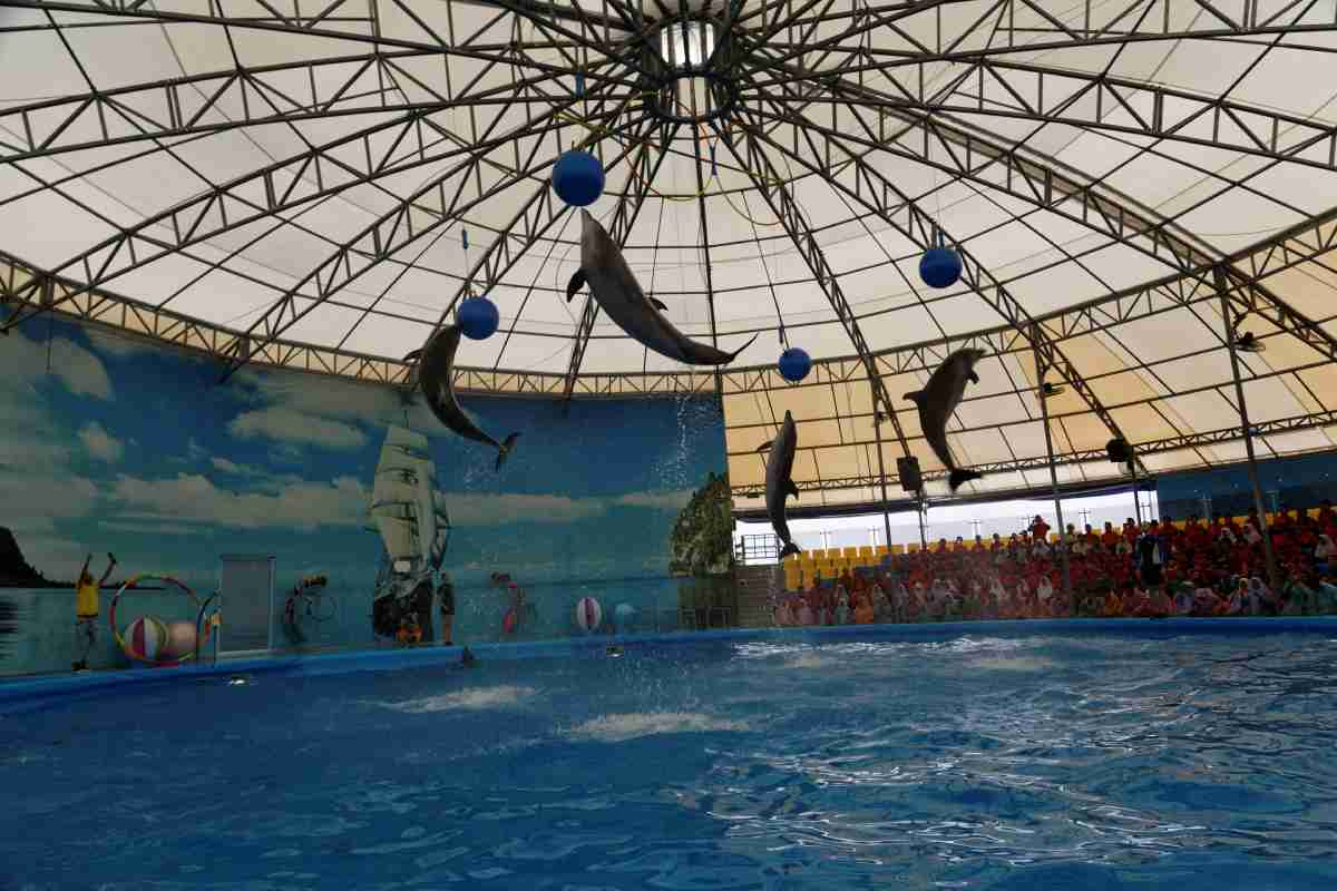 Dolphin Show Chalong