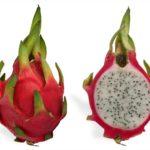 Dragon Fruit (แก้วมังกร - Gael Mangon) Hylocereus undatus