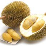 Durian (ทุเรียน - Thurian) Durio zibethinus