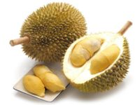 Durian (ทุเรียน - Thurian) Durio zibethinus