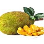 Jackfruit (ขนุน - Khanon) Artocarpus heterophyllus