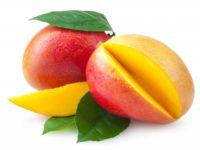 Mango (มะม่วง - Mamuang) Mangifera indica