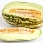 Thai Melon (แตงไทย - Tangtai) Cucumis melo
