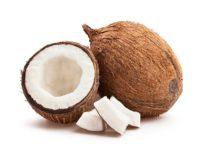 Coconut (มะพร้าว - Mapraw) Cocos nucifera
